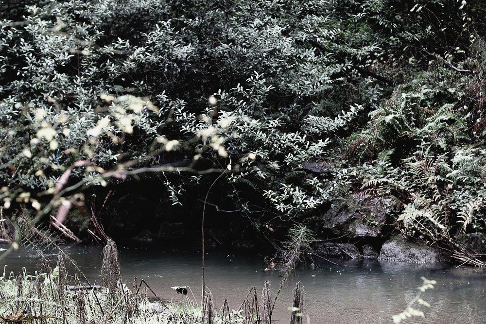Muir Woods-62.jpg
