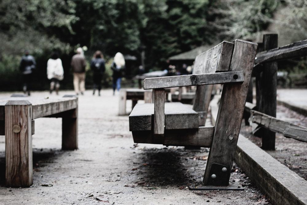 Muir Woods-45.jpg