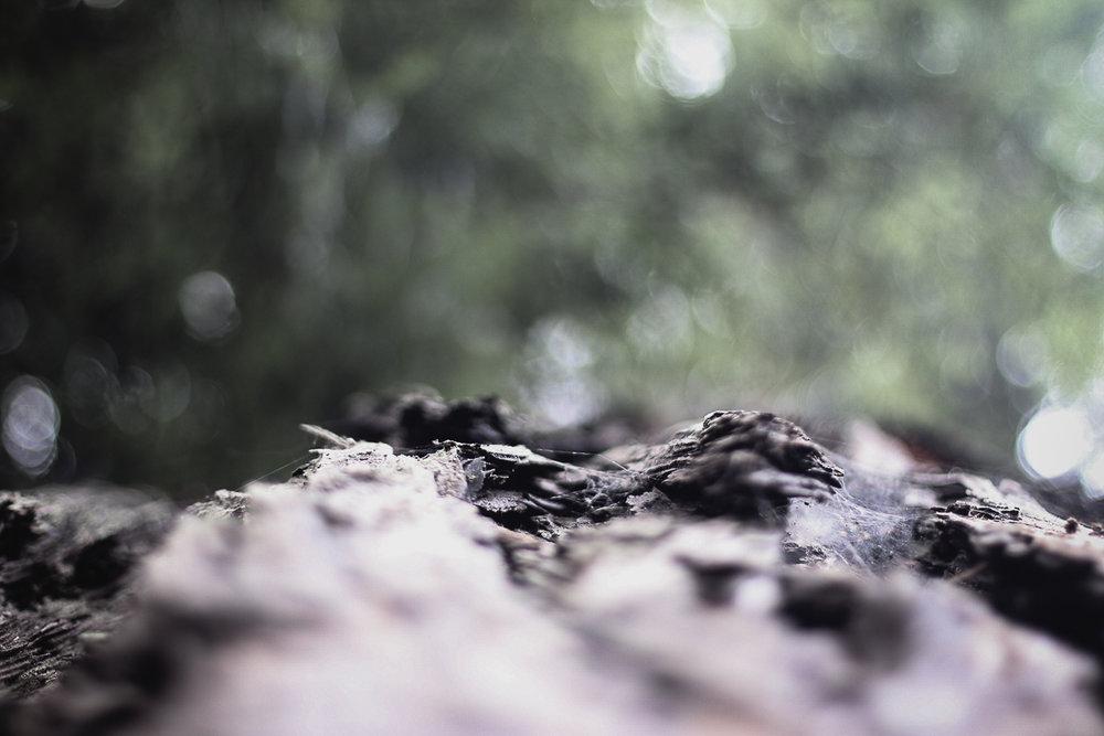 Muir Woods-61.jpg