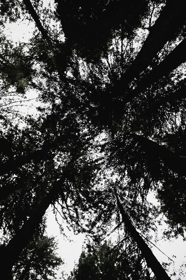 Muir Woods-80.jpg