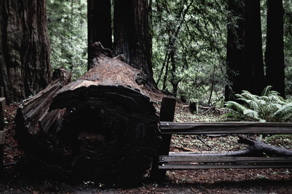 Muir Woods-79.jpg