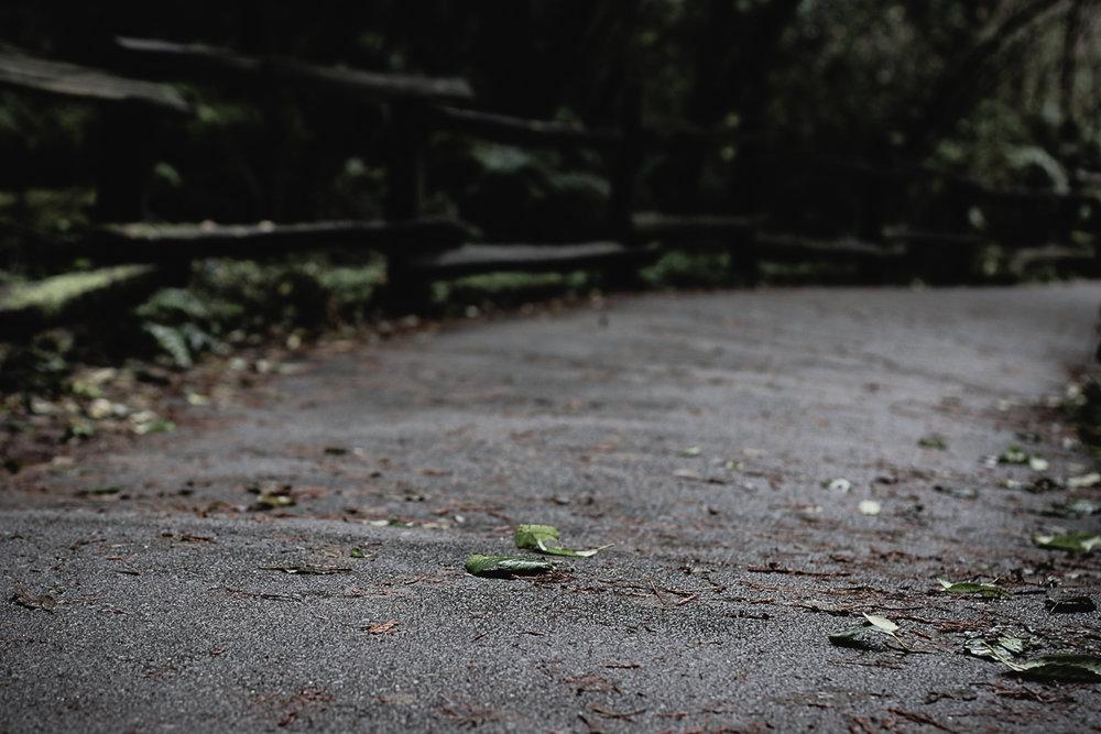Muir Woods-65.jpg