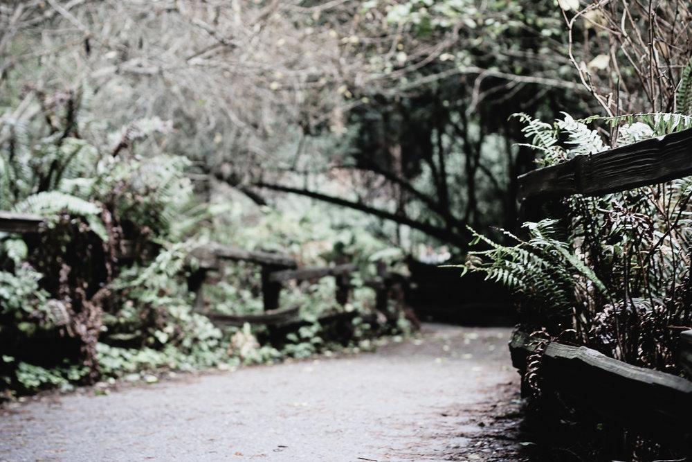 Muir Woods-66.jpg