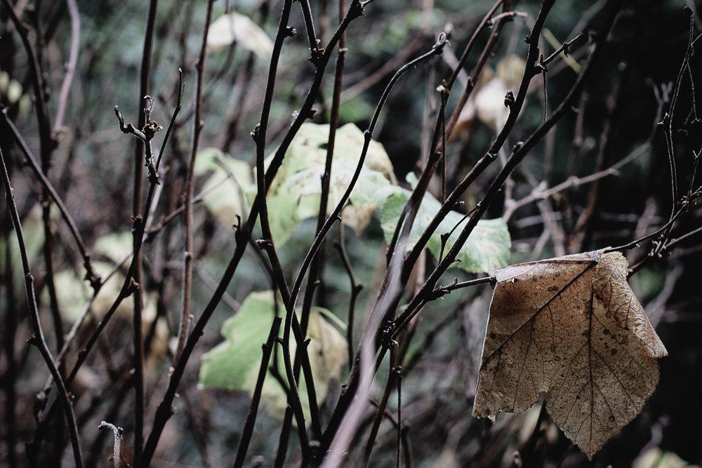 Muir Woods-67.jpg