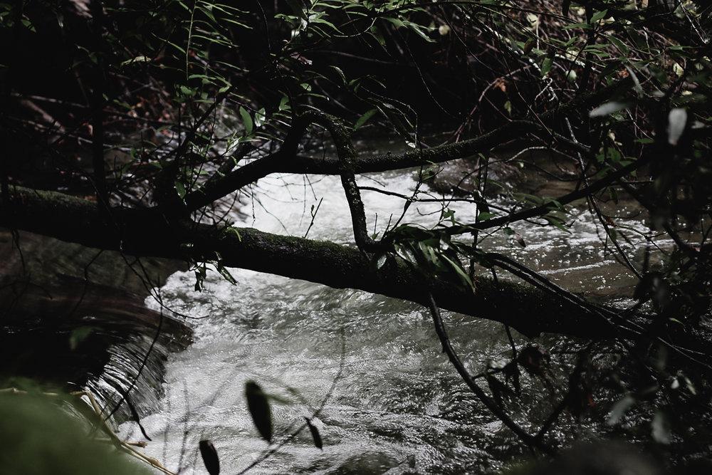 Muir Woods-68.jpg