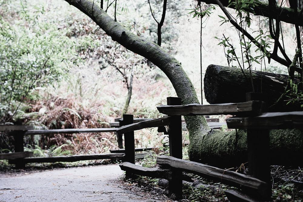 Muir Woods-69.jpg