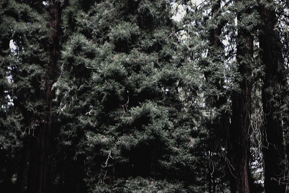Muir Woods-70.jpg