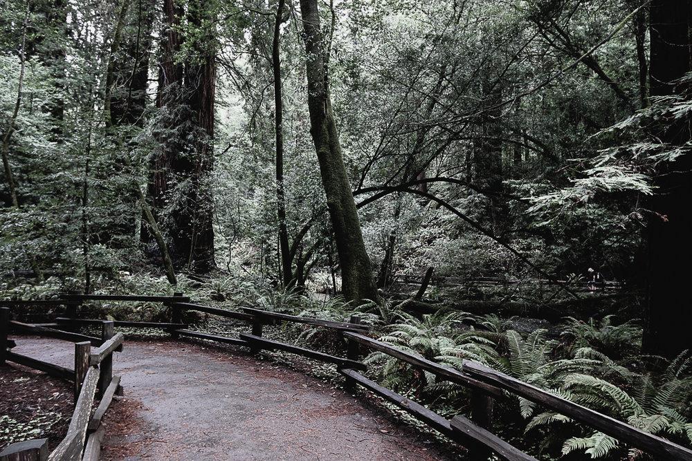 Muir Woods-71.jpg