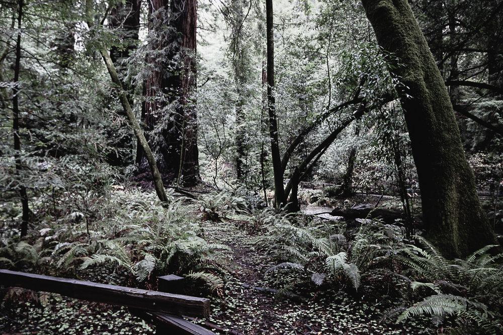 Muir Woods-72.jpg