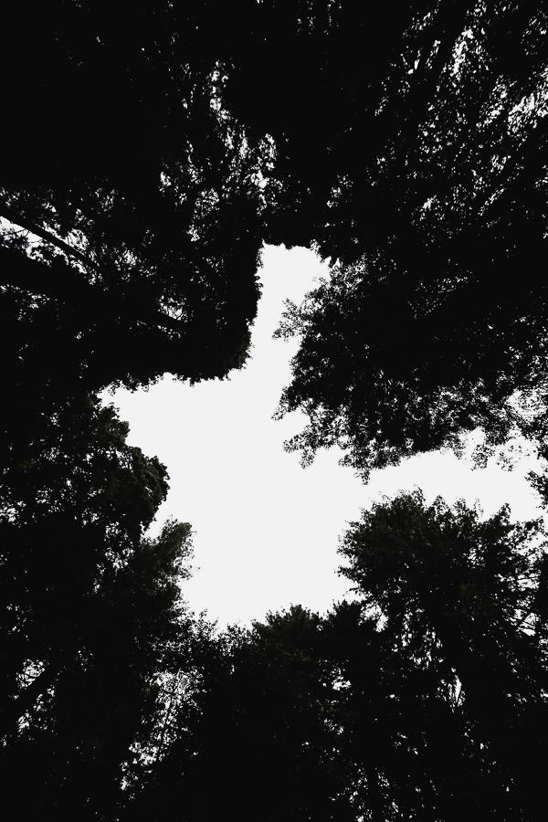 Muir Woods-73.jpg