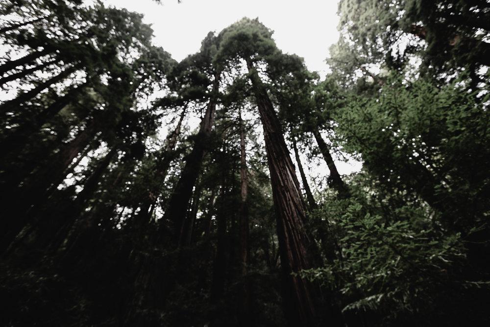 Muir Woods-74.jpg