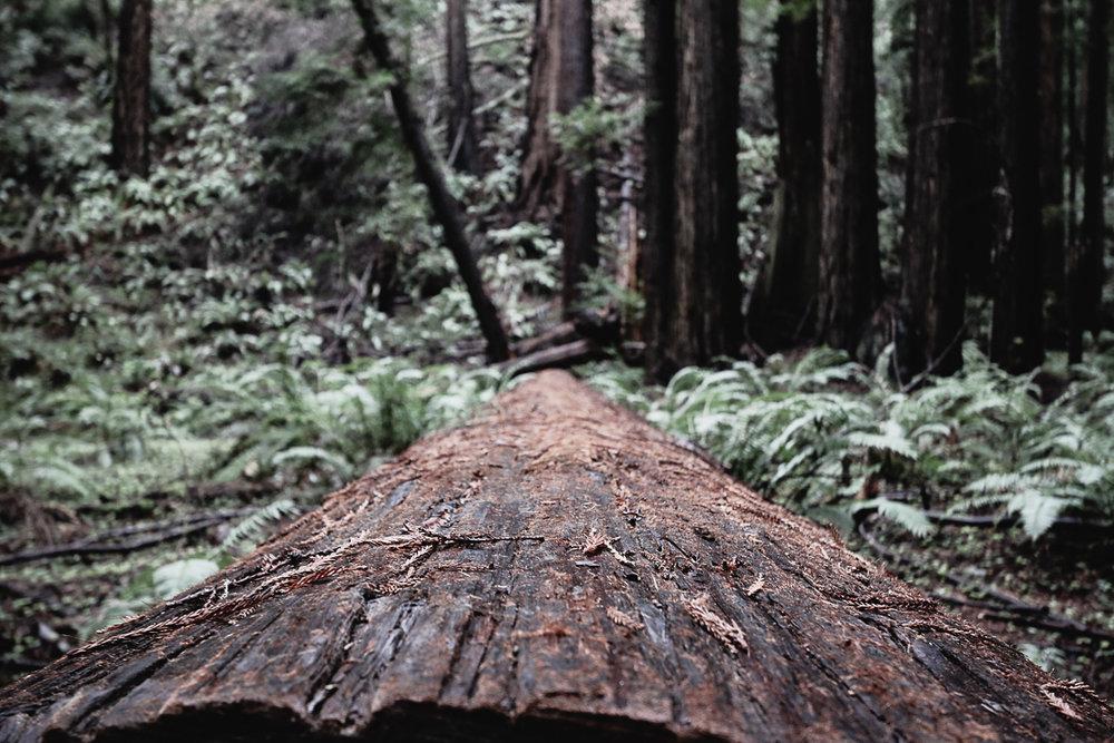 Muir Woods-75.jpg