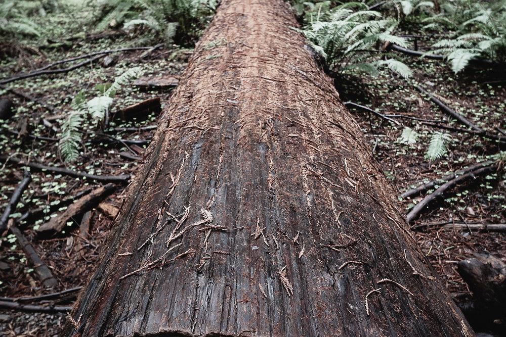 Muir Woods-76.jpg