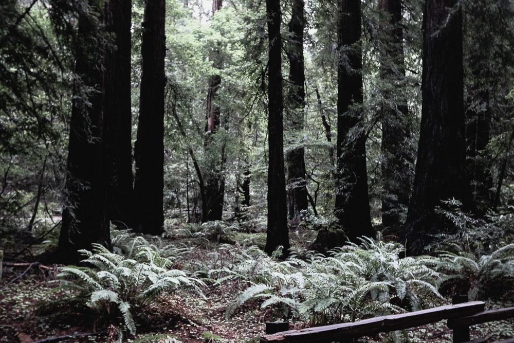 Muir Woods-77.jpg