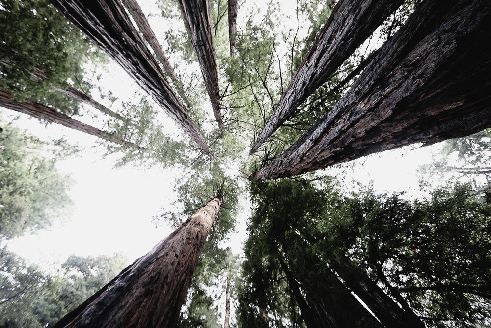Muir Woods-93.jpg