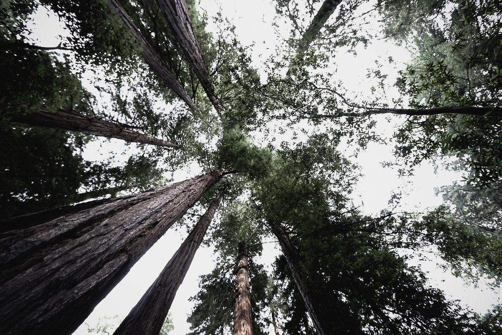 Muir Woods-92.jpg