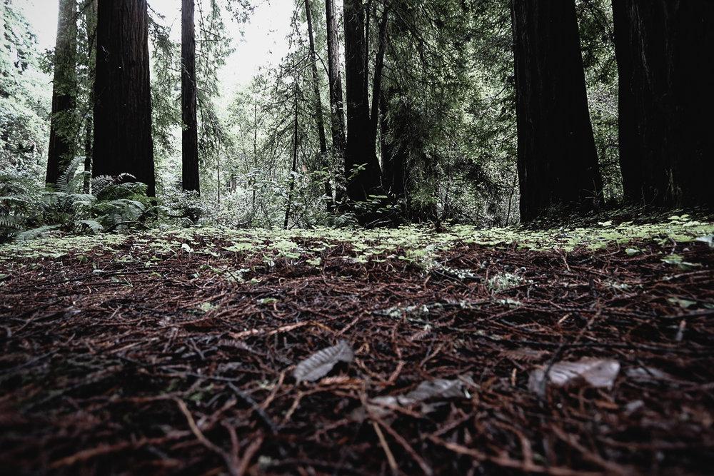 Muir Woods-94.jpg