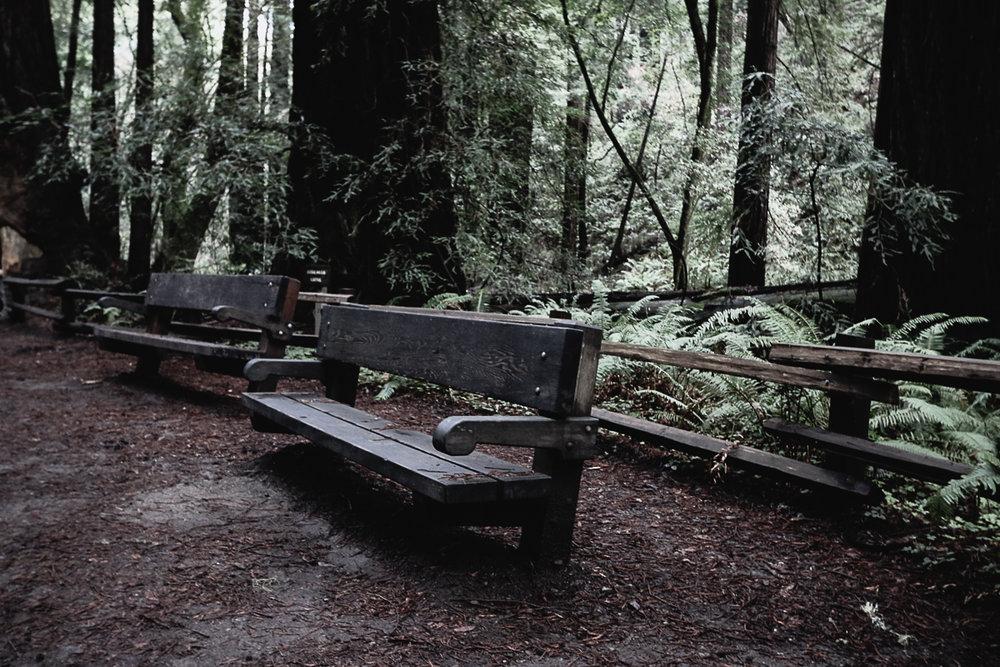 Muir Woods-82.jpg