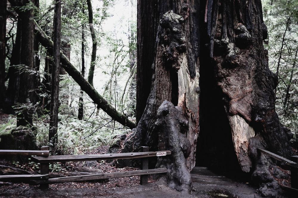 Muir Woods-89.jpg
