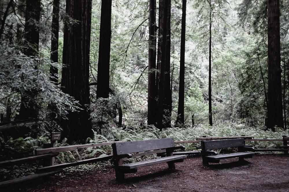 Muir Woods-90.jpg