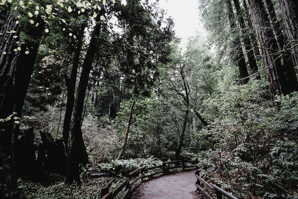 Muir Woods-91.jpg