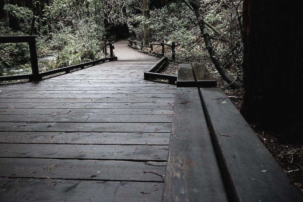 Muir Woods-124.jpg