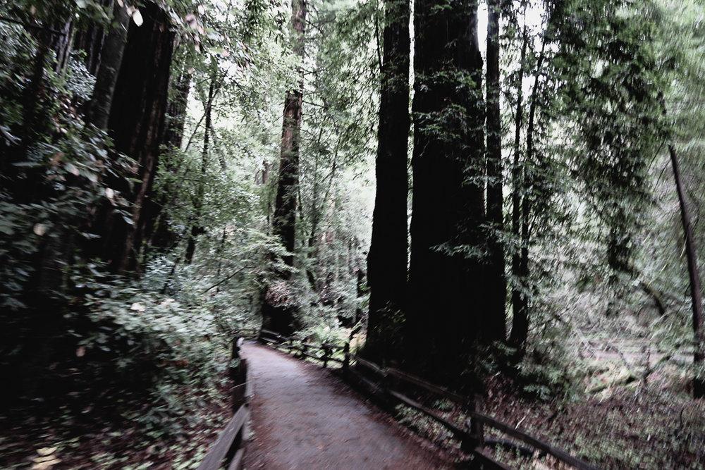 Muir Woods-98.jpg