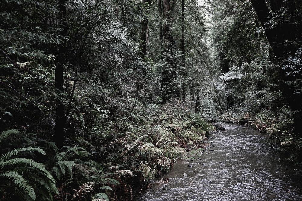 Muir Woods-101.jpg