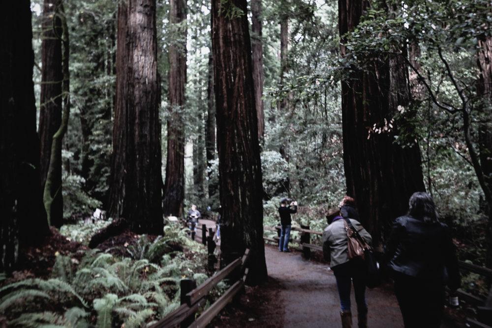 Muir Woods-103.jpg