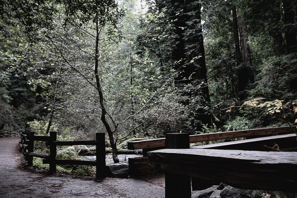 Muir Woods-102.jpg