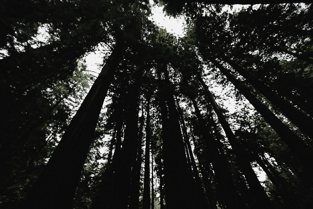 Muir Woods-105.jpg