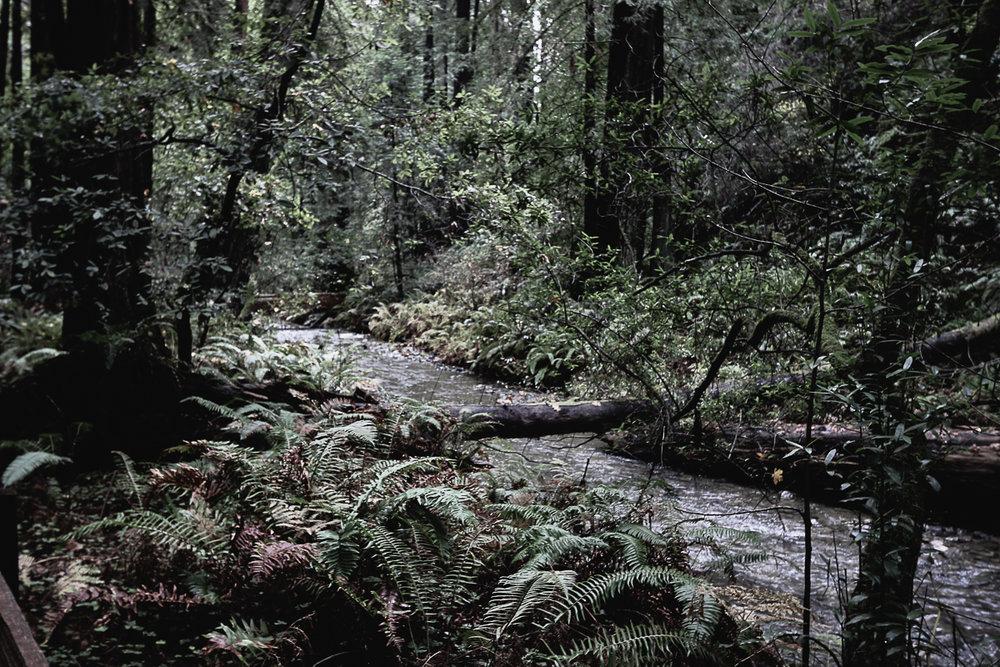Muir Woods-104.jpg
