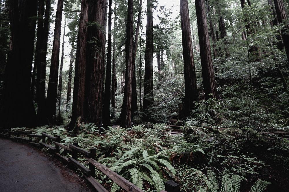 Muir Woods-106.jpg
