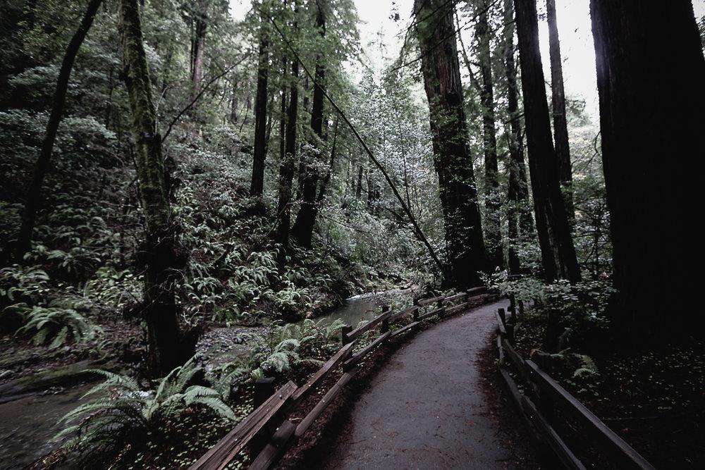 Muir Woods-107.jpg