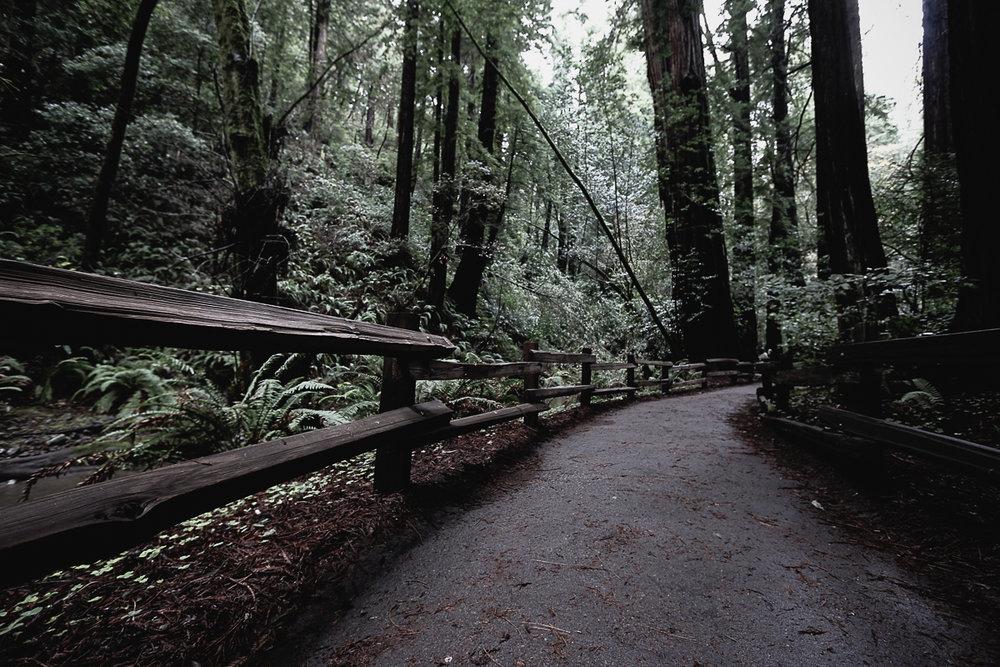 Muir Woods-108.jpg