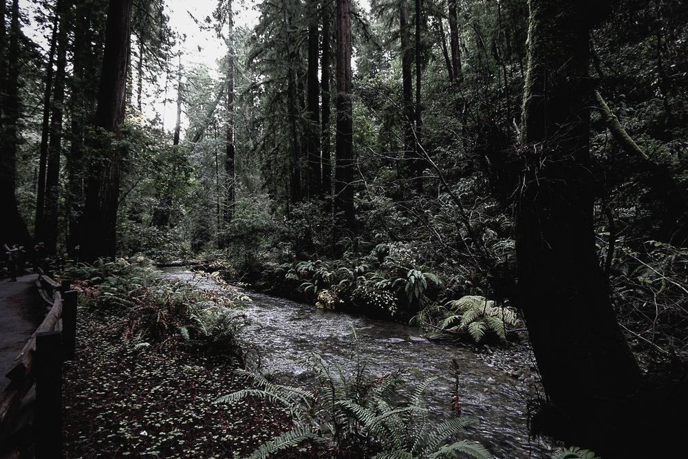 Muir Woods-109.jpg