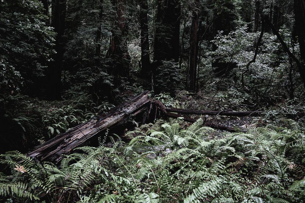 Muir Woods-111.jpg