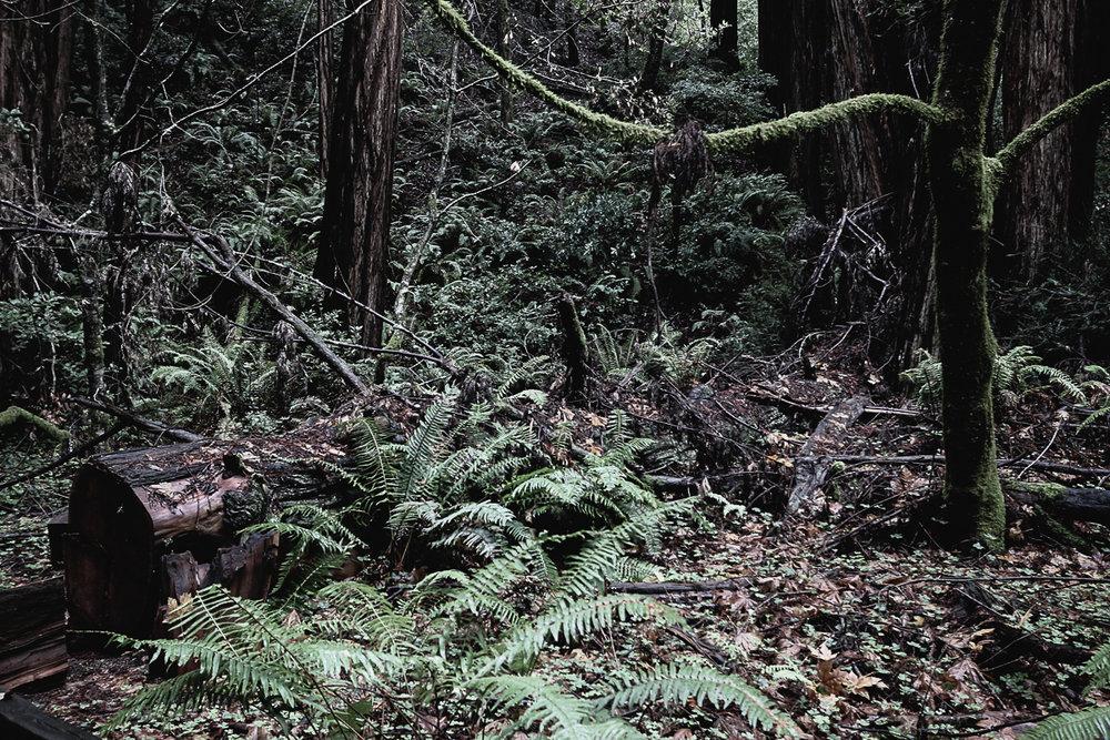 Muir Woods-112.jpg