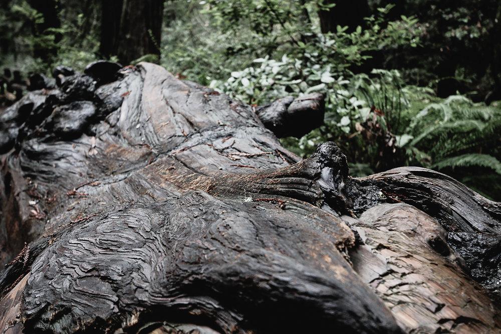Muir Woods-113.jpg
