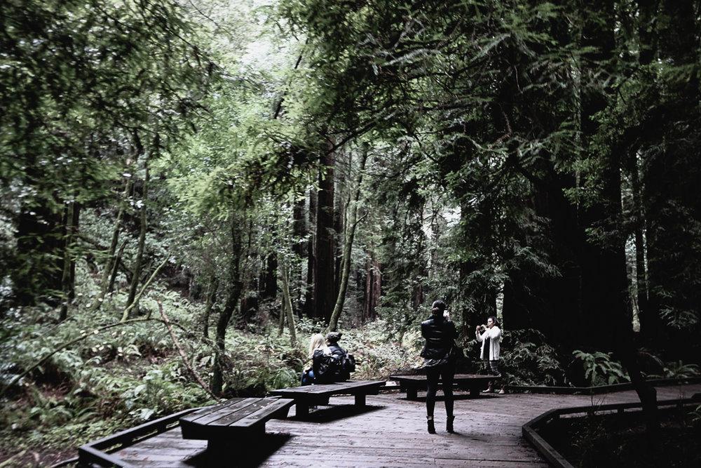 Muir Woods-114.jpg