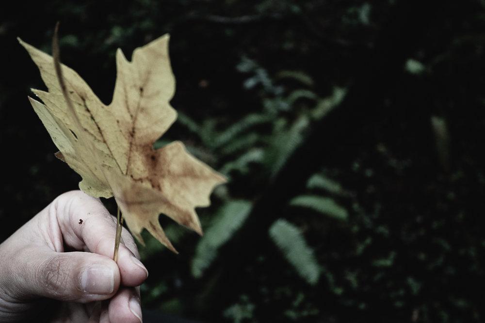 Muir Woods-119.jpg