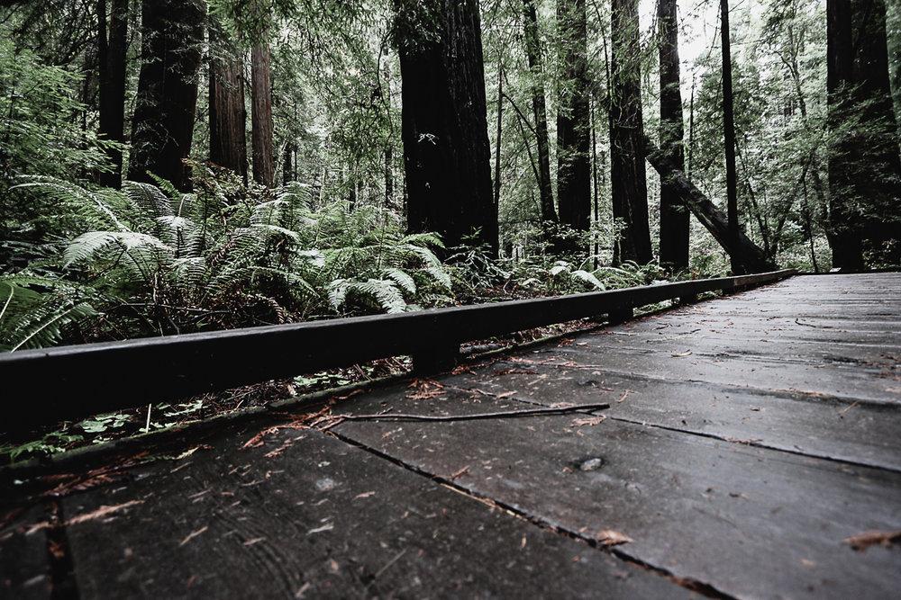 Muir Woods-121.jpg