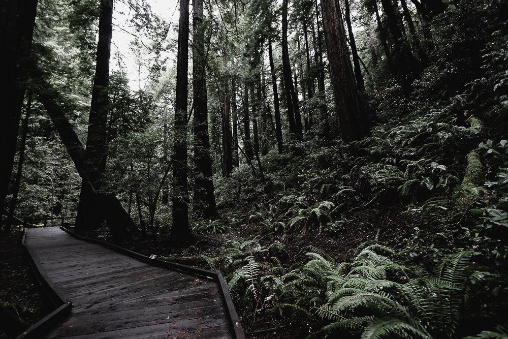 Muir Woods-123.jpg