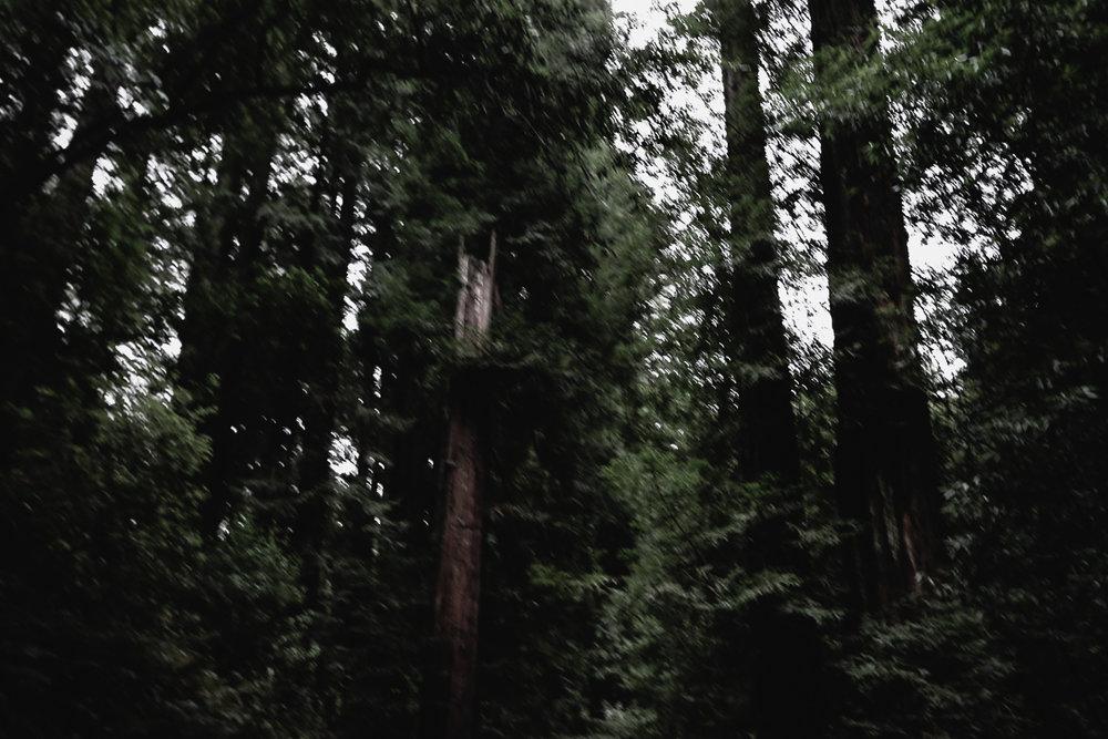 Muir Woods-126.jpg