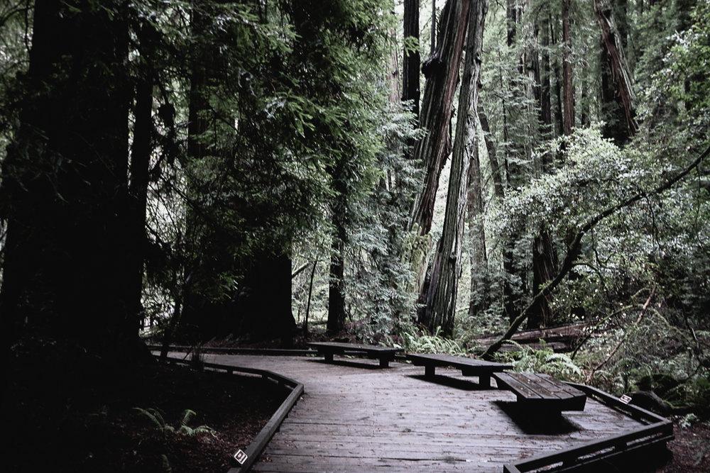 Muir Woods-125.jpg