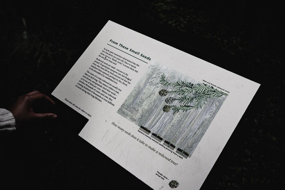 Muir Woods-127.jpg