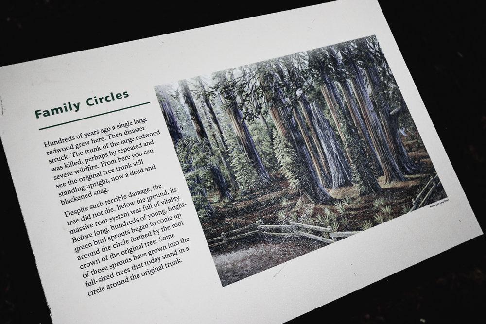 Muir Woods-128.jpg