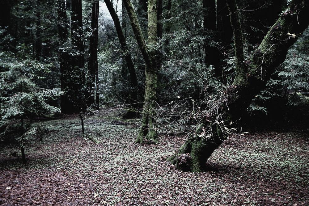 Muir Woods-129.jpg