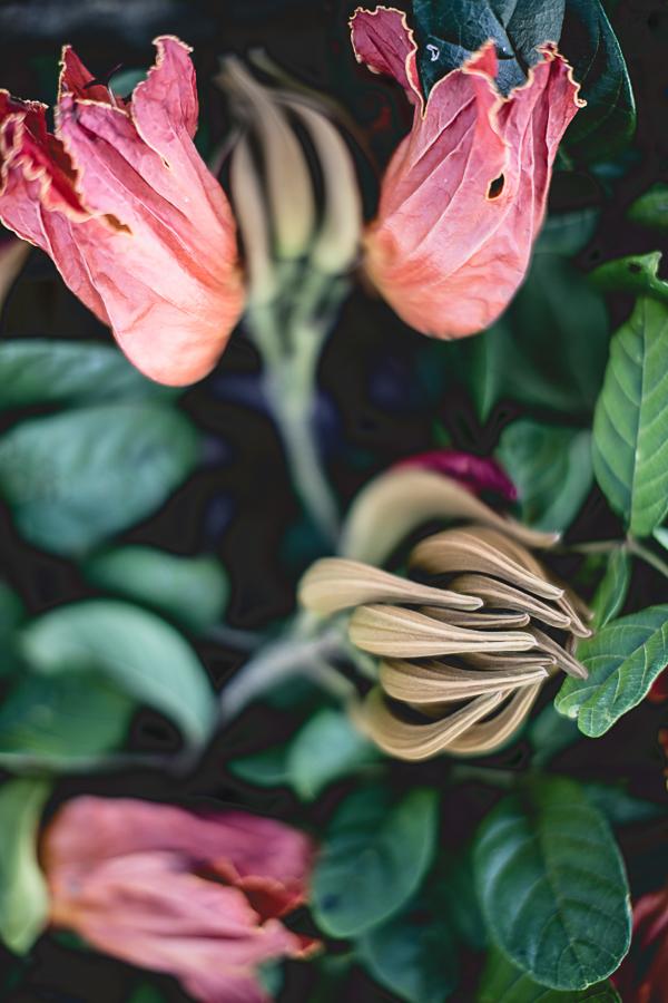 Still life with flowers-5.jpg