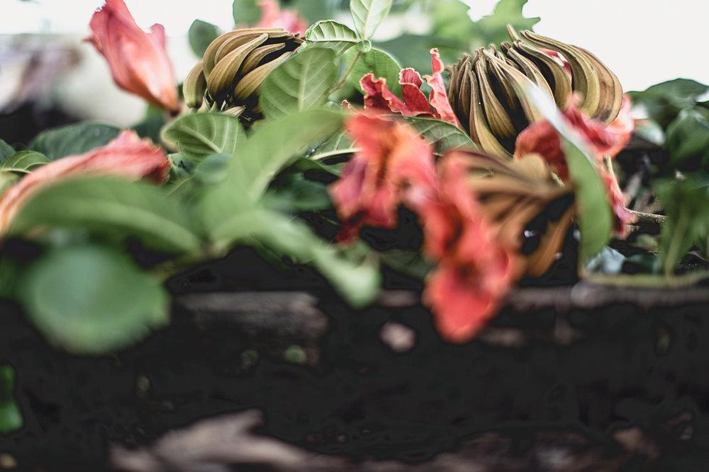 Still life with flowers-7.jpg
